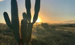 Foto do dia: Por-do-sol de quase-inverno neste momento em minha Serrote
