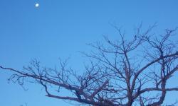 A lua é testemunha da pior seca dos últimos 60 anos. Foto tirada por Missa em 2013