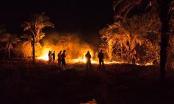 Fogo consome grande área de terra em Serrolândia, secretário tenta mobilizar população
