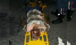 Homem morre ao ser atropelado por carro na Av Centenário em Jacobina