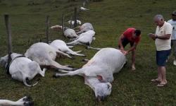 Temporal com queda de raio provoca morte de 16 animais em fazenda na Bahia