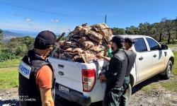 Inema descobre fraude em cadeia produtiva de carvão vegetal em Miguel Calmon/Ba