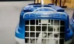 Filhotes de cachorro em situação de maus-tratos são resgatados em bagageiro de ônibus na Bahia