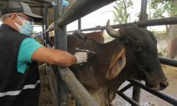 Bahia deve vacinar mais de 10 milhões de animais contra a febre aftosa até o final de maio