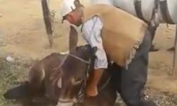 Zequinho e seu burro domesticado