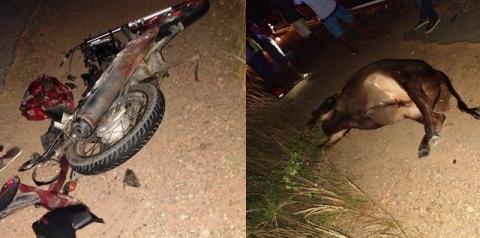 Motoqueiro morre ao atropelar vaca em rodovia