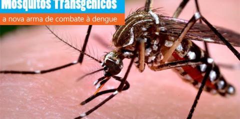 Repúdio sobre fake news a respeito dos mosquitos transgênicos em Jacobina