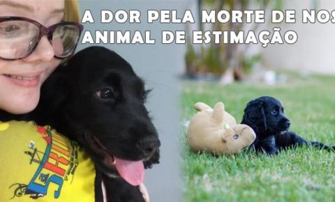 Virose canina: Doença já levou vários cães a morte nos últimos meses na região de Serrolândia