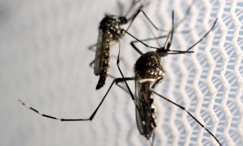 Brasil tem mais casos de chikungunya do que de zika em 2016