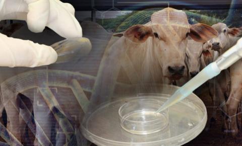 """Brasil vai exportar embriões bovinos """"in vitro"""" para a Índia"""