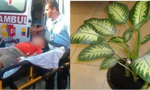 Planta caseira causa morte de criança de 5 anos