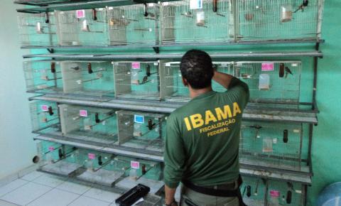 Ibama suspende 33 criadouros de animais por irregularidades