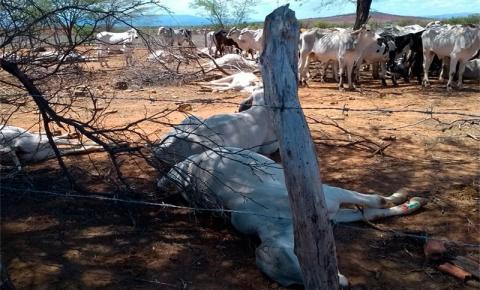 Mais de 60 cabeças de gado aparecem mortas em fazenda no município de Tanhaçu
