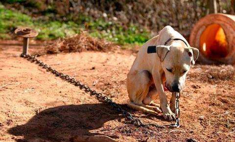 Lei proíbe deixar cachorros acorrentados e sempre presos