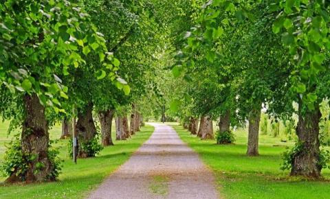 Plantar árvores nas cidades devia ser visto como uma medida de saúde pública, diz cientista