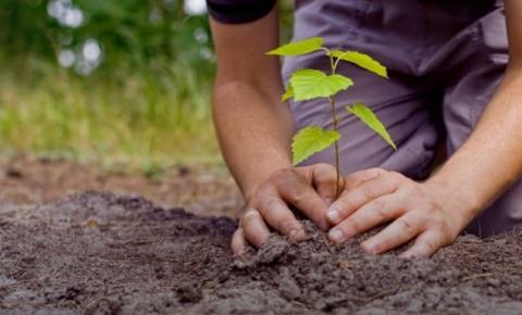 MRV realizou o plantio de 137 mil árvores; na região Norte foram mais de 8 mil