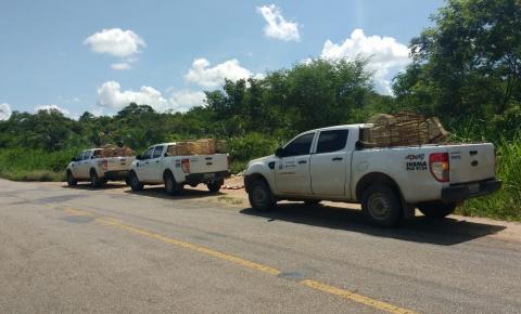 INEMA apreende mais de 500 pássaros em operações na região de Capim Grosso