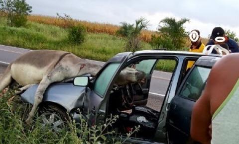 GRAVE ACIDENTE ENTRE CARRO E ANIMAL NA BR-407 NO MUNICÍPIO DE PONTO NOVO