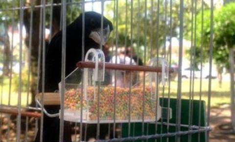 Meio Ambiente debate projeto que proíbe manter pássaros em cativeiro