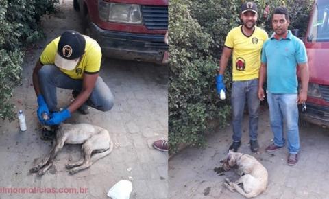 Jovens se sensibilizam ao ver cão com ferimentos e resolvem ajudar