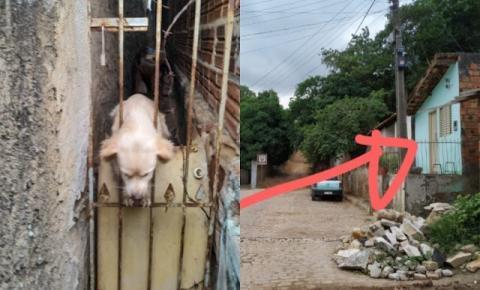 Cães passam fome apos serem deixados sozinhos em Jacobina