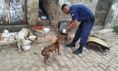 Guarda Civil Municipal liberta e alimenta cães em Jacobina