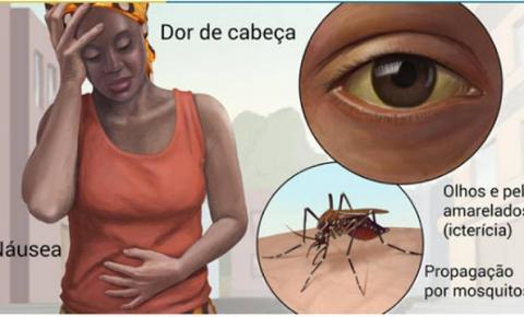 Bahia: Surto de febre amarela faz Sesab recomendar vacinação em 45 municípios; confira.