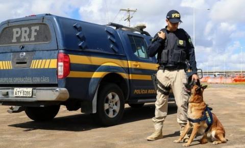 Com ajuda de cão farejador, PRF detém mulher transportando maconha na BR 116