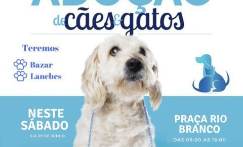 Feira de adoção de cães e gatos acontece neste sábado em Jacobina