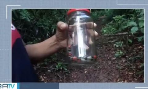 Cobra-coral é encontrada dentro de creche no sul da Bahia
