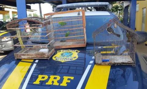 Animais silvestres são resgatados de porta-malas de carro durante abordagem na Bahia