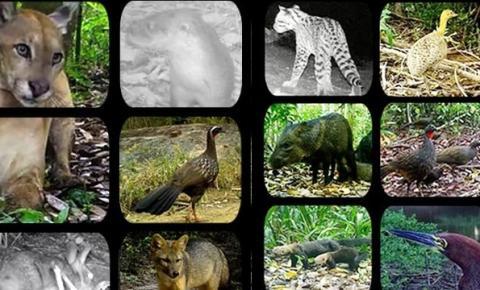 Parque das 7 passagens divulga registros inéditos feitos por câmeras instaladas na reserva