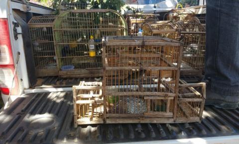 Pássaros silvestres são apreendidos em cativeiro irregular durante fiscalização na Bahia