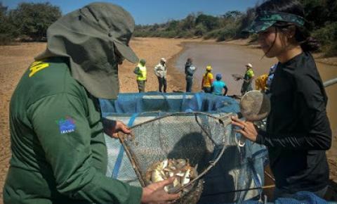 Ibama resgata 230 mil peixes na lagoa de Itaparica, em Xique-Xique por conta da seca