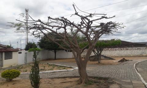 Poda irregular de árvores revolta moradores de Serrolândia na Bahia.