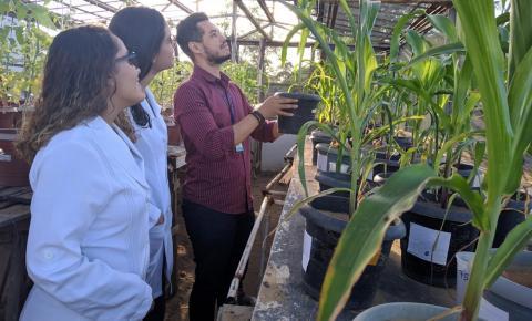 Cientista baiano busca utilizar vegetação da Caatinga para criar produto que deixe outras plantas mais resistentes à seca