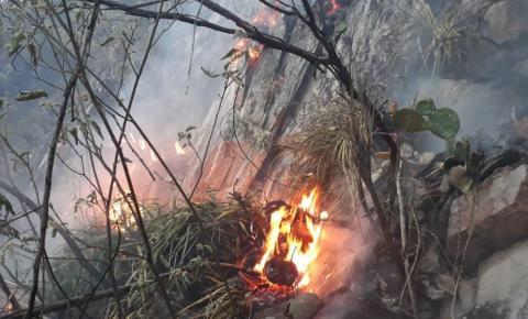Incêndio de grandes proporções atinge área de vegetação na Chapada Diamantina