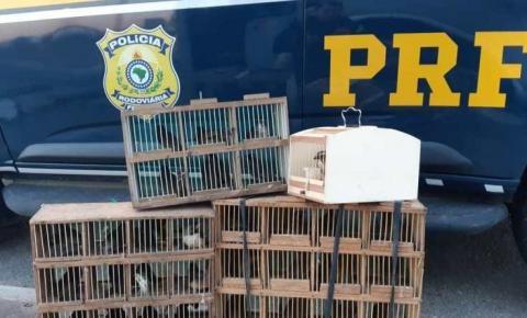 PRF resgata pássaros sendo transportados irregularmente dentro de compartimento de bagagens