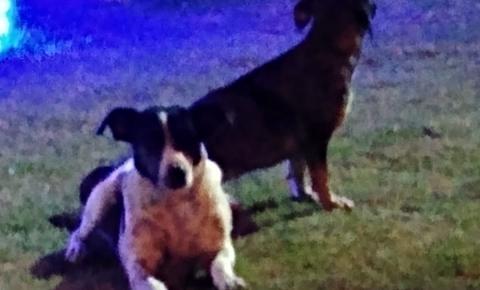 Cães atacam transeuntes nas ruas de Serrolândia