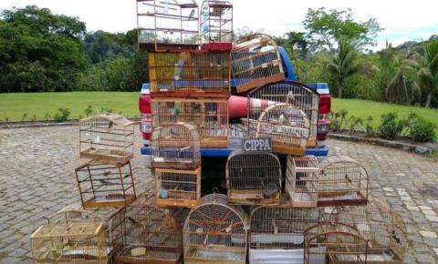 Polícia Ambiental resgata pássaros no interior baiano