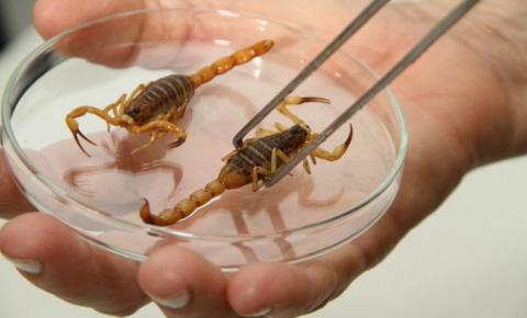 Mulher morre após ser picada por escorpião na Bahia