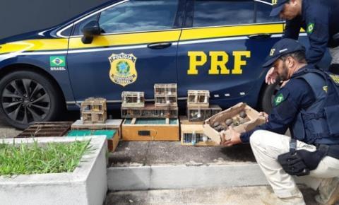 PRF resgata jabutis e pássaros silvestres em van que saiu de Várzea do Poço