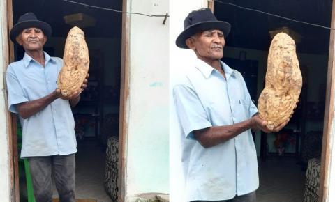 Lavrador colhe batata gigante em Serrolândia