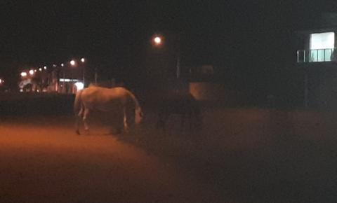 Cidadão denuncia a presença de animais soltos as margens da BA 417 em Serrolândia