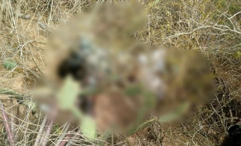 Homem de 39 anos encontrado morto no mato em Lages do Batata de Jacobina
