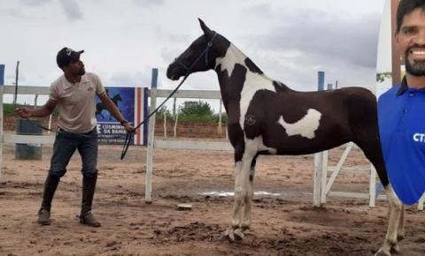 Domador de animais morre vítima de acidente de trabalho no município de Miguel Calmon