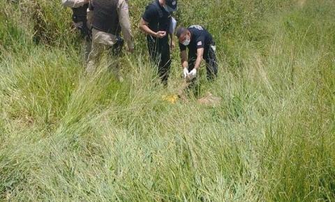 Piritibano é encontrado morto no município de Mundo Novo
