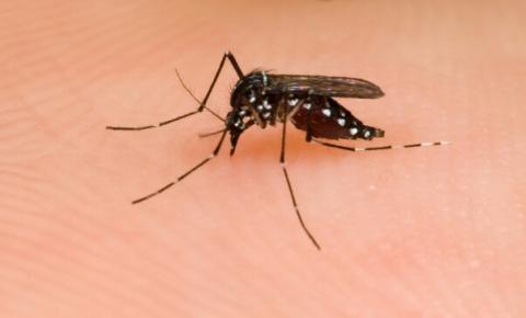 Em março, SBP promove seminário sobre Vacina contra Dengue