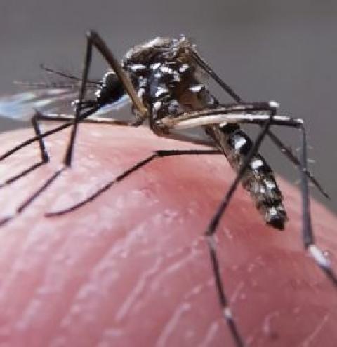 Mortes por dengue somam quase 300 no Brasil, total três vezes maior que 2018