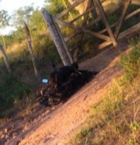 Homem é assassinado no município de Mairi